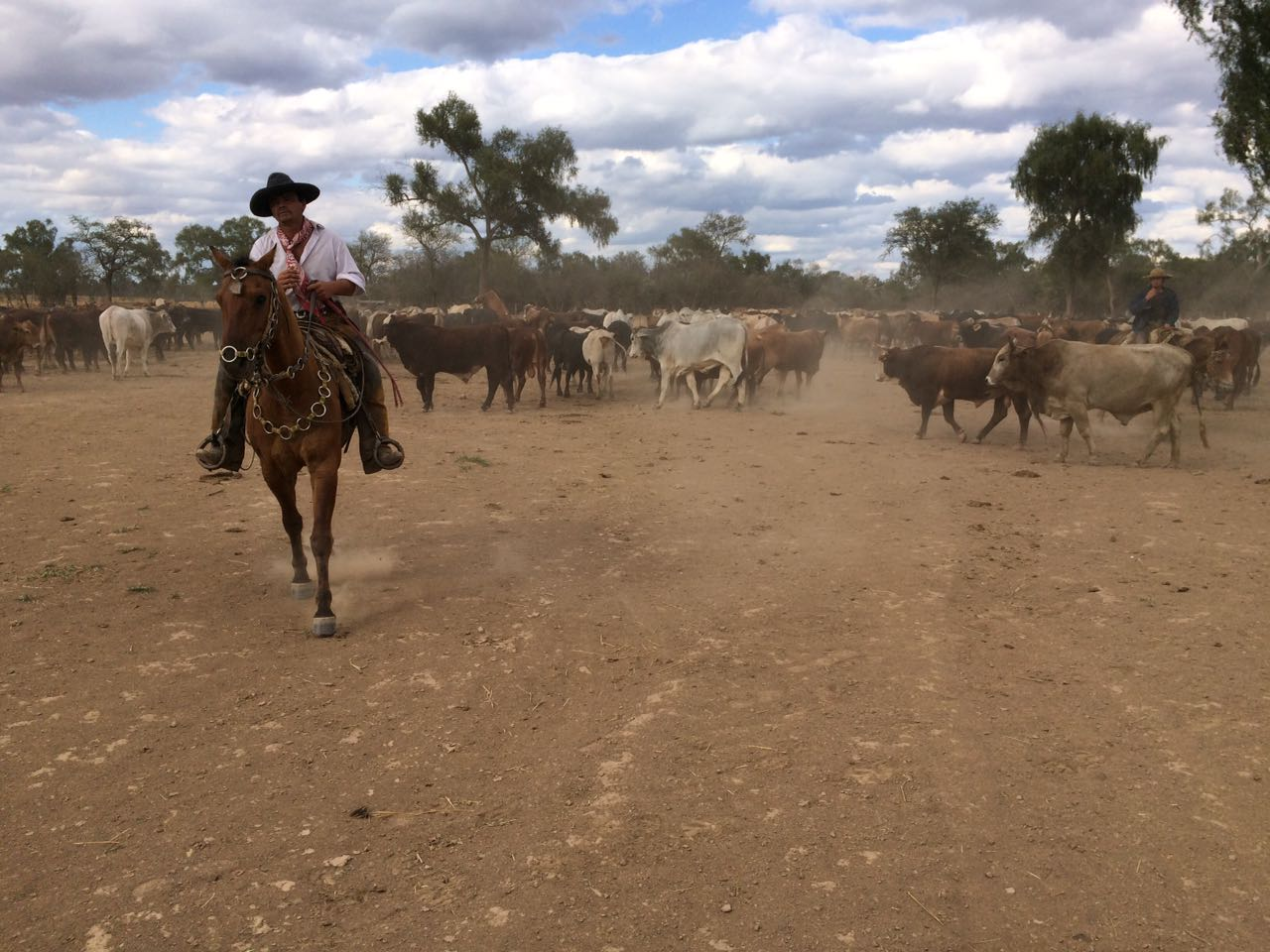 Paraguay cattle raising opportunity - cattle herder