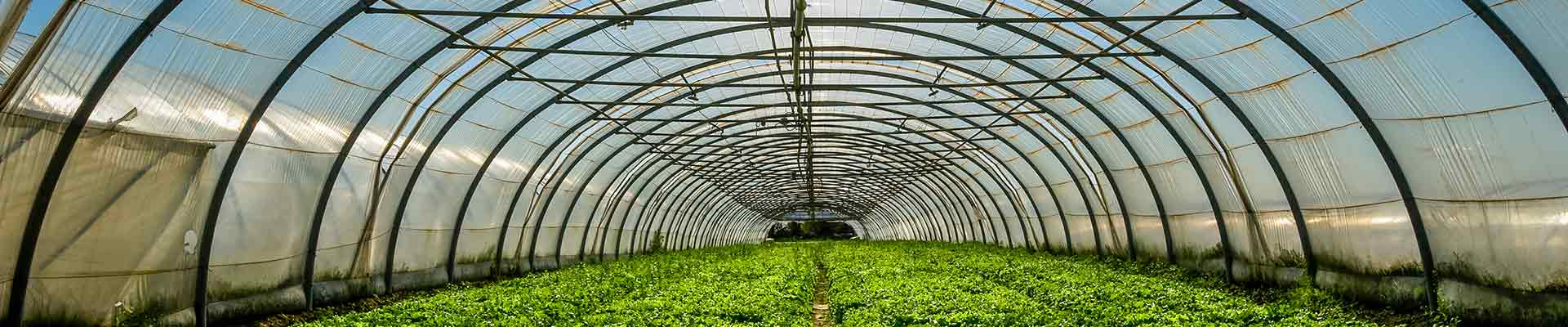 Greenhouse Investment in Paraguay
