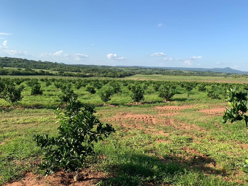 Paraguay Orange Plantation Client Visit Nov 18