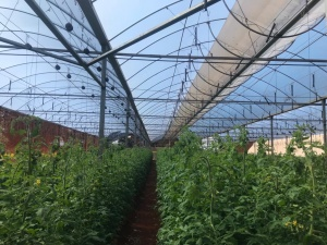 Greenhouses Paraguay AG Invest