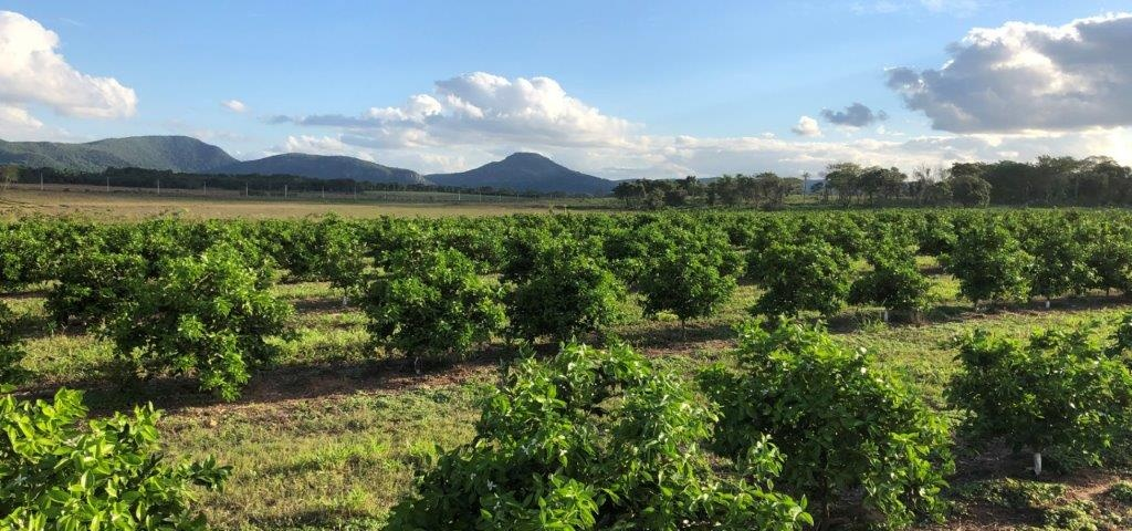 Paraguay Orange Plantation April 2019