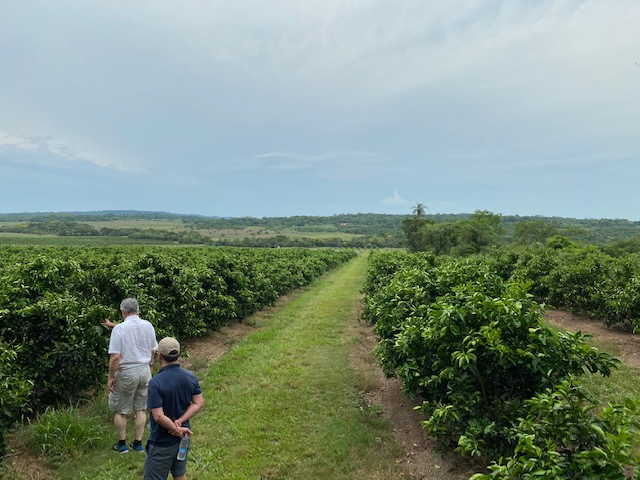 Orange plantation tour Paraguay January 2020