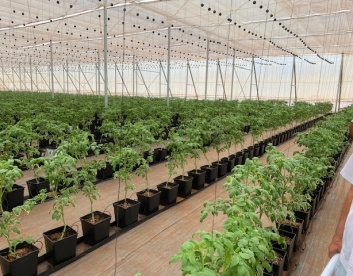 Greenhouse in Paraguay