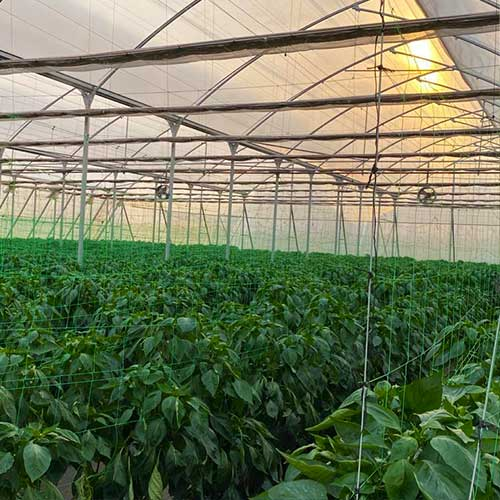 agri terra greenhouses