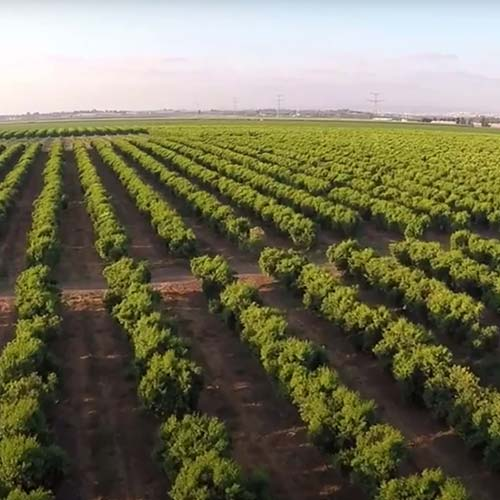 agri terra orange plantations